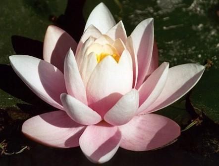 Символ будды загадочный и прекрасный
